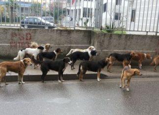 Qen rruge në Tiranë. Citzens Channel